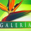 Galer�a - Flores Naturales y Algo M�s...
