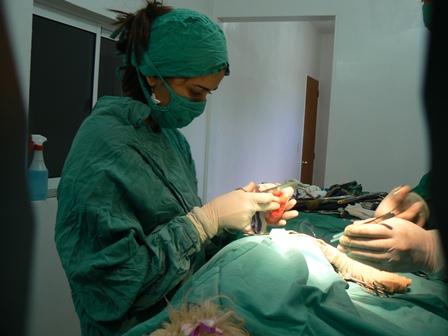 Estas viendo imágenes del artículo: Clínica Veterinaria La Mascota, Dr. Alfredo Puchi - Galería